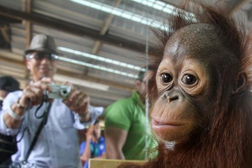Monkeys Can Talk