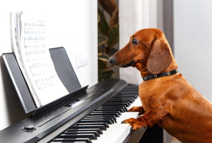 Dogs Reggae